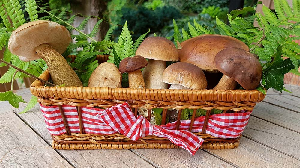 mushrooms_training
